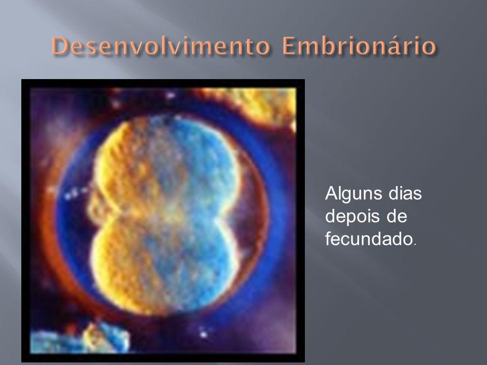 Embrião de 3 a 5 semanas¨6 semanas7 semanas 8 semanas10 a 12 semanas 14 a 16 semanas