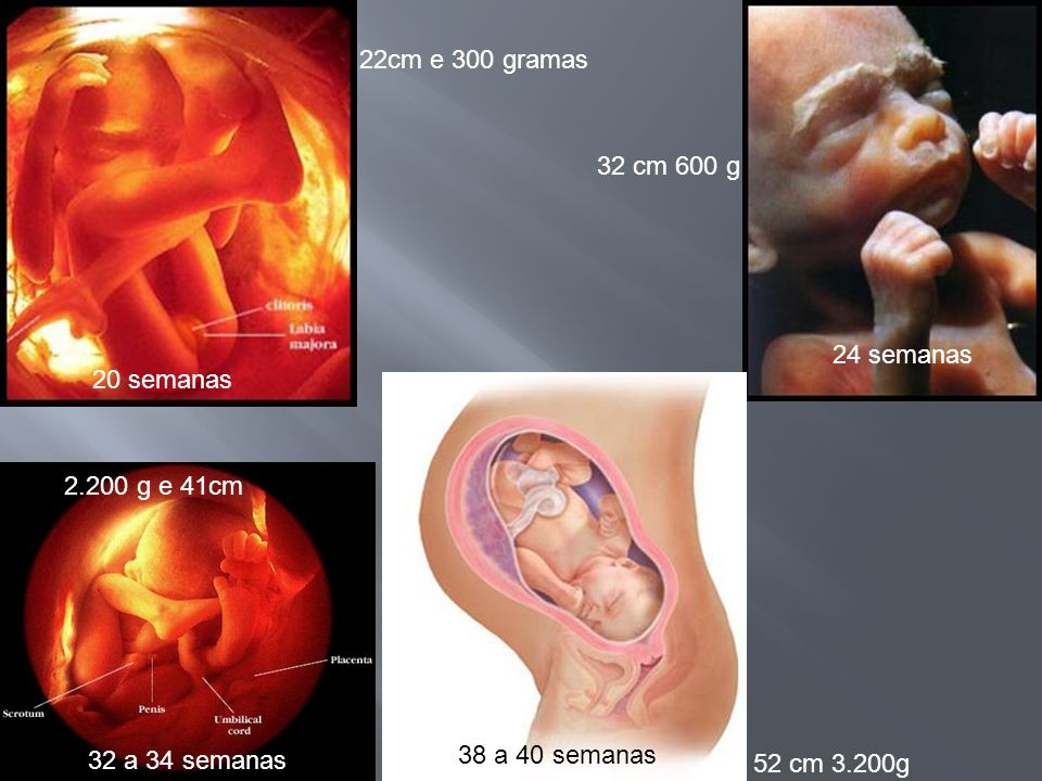 20 semanas 24 semanas 32 a 34 semanas 38 a 40 semanas 22cm e 300 gramas 32 cm 600 g 2.200 g e 41cm 52 cm 3.200g