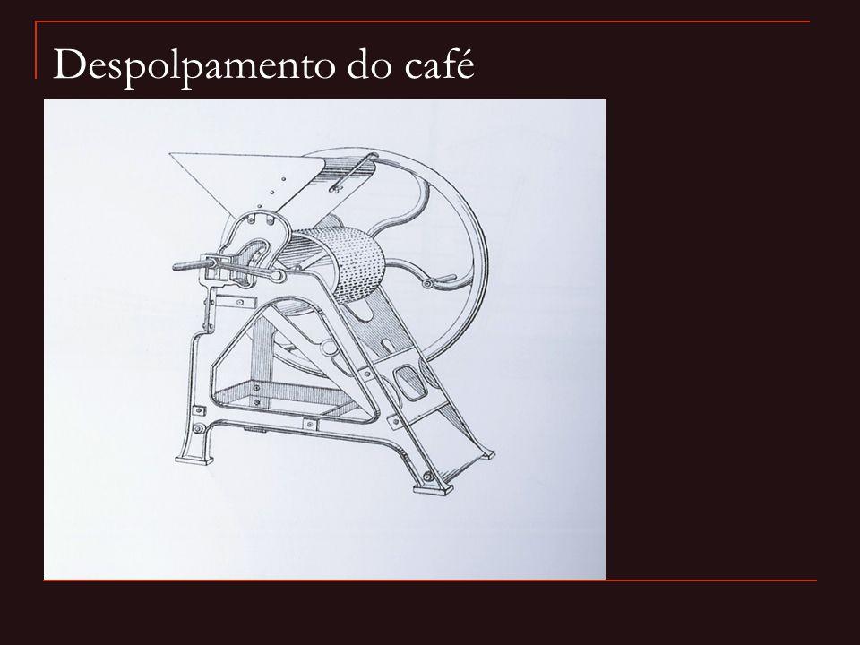 Despolpamento do café 