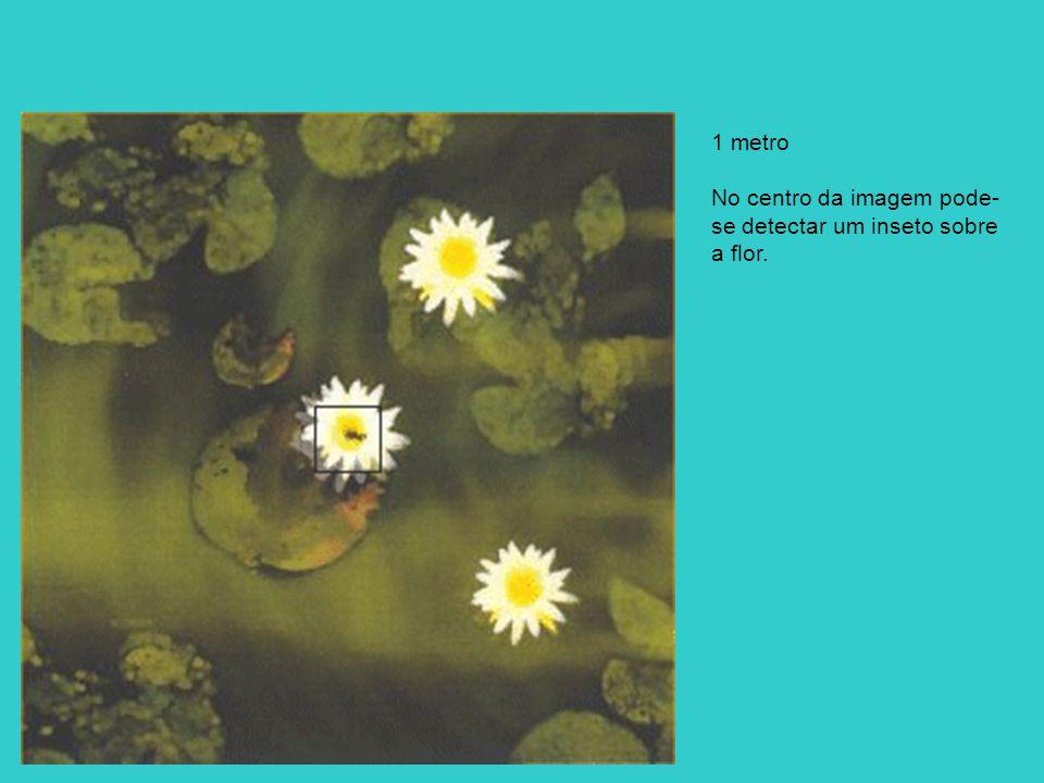 1 metro No centro da imagem pode- se detectar um inseto sobre a flor.