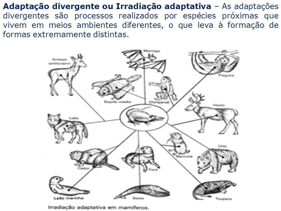 Adaptação divergente ou Irradiação adaptativa – As adaptações divergentes são processos realizados por espécies próximas que vivem em meios ambientes