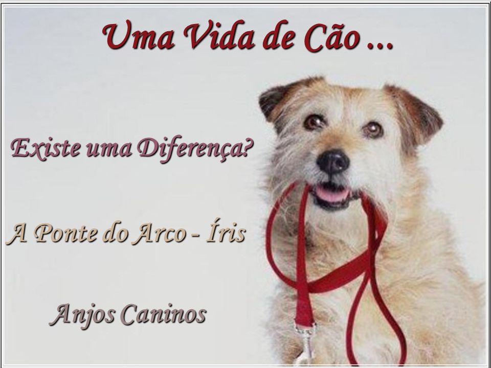 A Ponte do Arco - Íris Anjos Caninos Existe uma Diferença? Uma Vida de Cão...