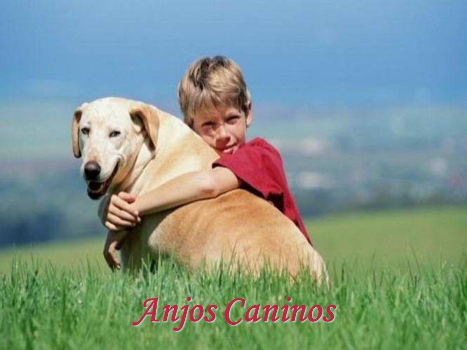 O pequeno filhote e o cão mais velho estavam deitados à sombra, sobre a grama verde, observando os reencontros. Às vezes um homem, às vezes uma mulher