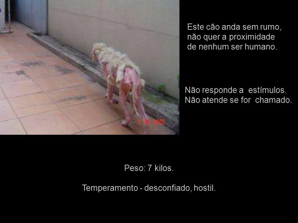 Este cão anda sem rumo, não quer a proximidade de nenhum ser humano.