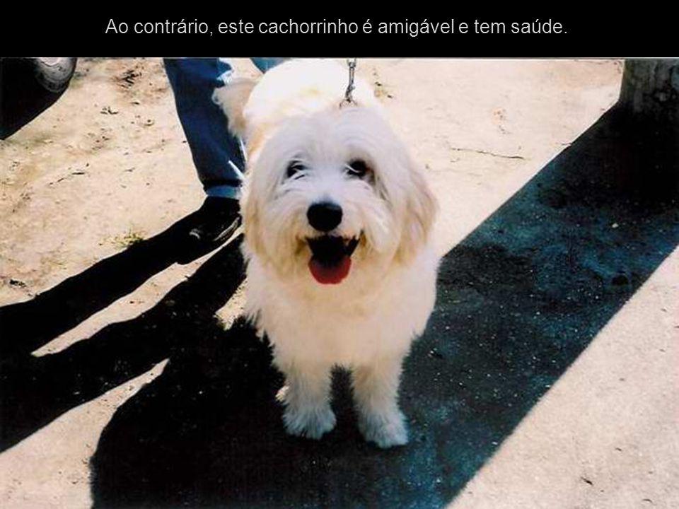 Foto Publicada no Jornal O Globo Linda muito linda, a amizade do animal pelo seu dono independentemente de como ele seja e de que classe social Diz a reportagem: O cão, diz a crença popular, é o melhor amigo do homem.