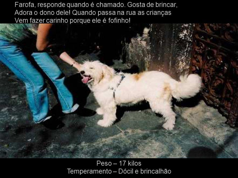 Esse cachorro não tem nome, não tem dono e muito menos tem um lar, muitas vezes passa desapercebido pela população, essa foi a idéia que tive ( fotografo ) para que todos parassem e olhasse diretamente para seus olhos e visse o que ele transmite....