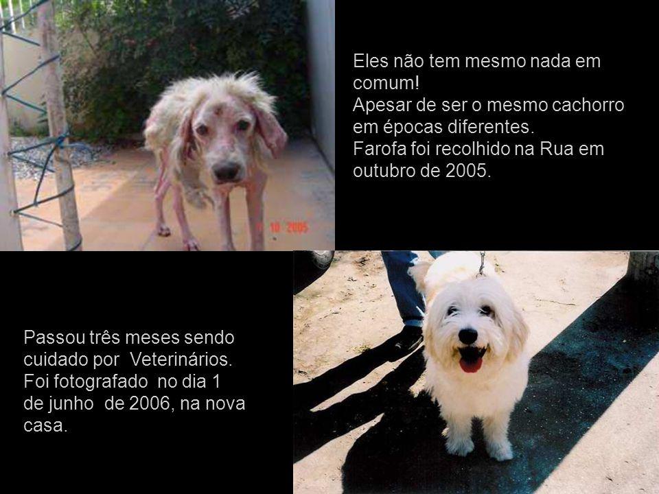 Eles não tem mesmo nada em comum.Apesar de ser o mesmo cachorro em épocas diferentes.