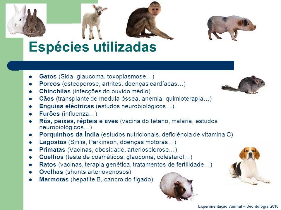 Espécies utilizadas  Gatos (Sida, glaucoma, toxoplasmose…)  Porcos (osteoporose, artrites, doenças cardíacas…)  Chinchilas (infecções do ouvido méd