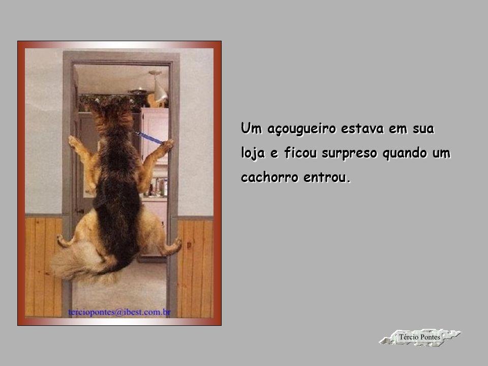 O Cachorro