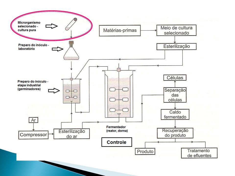Fontes de Microrganismos de Interesse Microrganismos de interesse industrial podem ser obtidos das seguintes formas:  Isolamento a partir de recursos naturais;  Compra em coleções de culturas;  Obtenção de mutantes naturais;  Obtenção de mutantes induzidos por métodos convencionais;  Obtenção de microrganismos recombinantes por técnicas de engenharia genética.