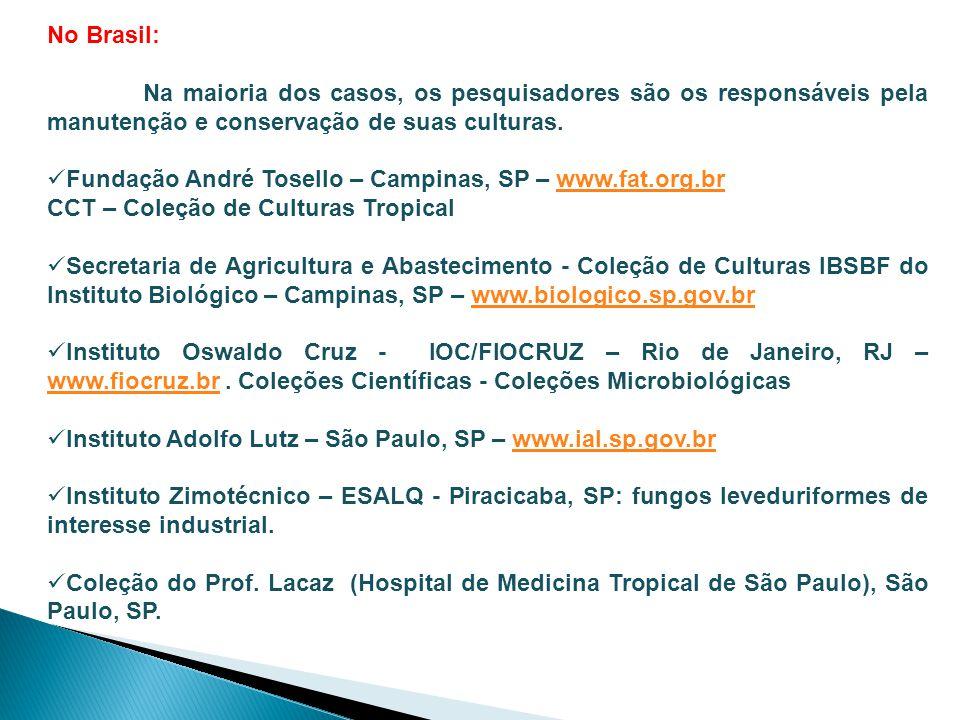 No Brasil: Na maioria dos casos, os pesquisadores são os responsáveis pela manutenção e conservação de suas culturas.  Fundação André Tosello – Campi