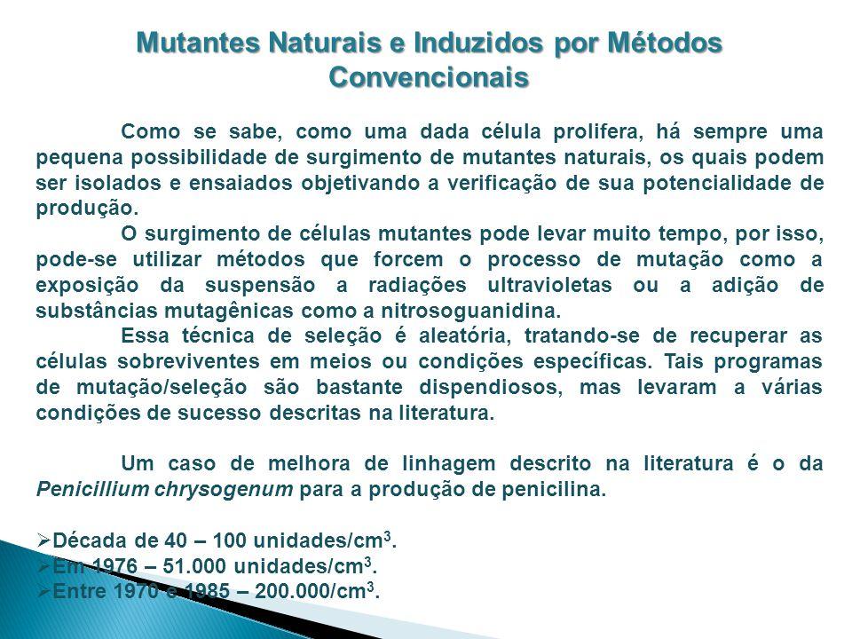 Mutantes Naturais e Induzidos por Métodos Convencionais Como se sabe, como uma dada célula prolifera, há sempre uma pequena possibilidade de surgiment