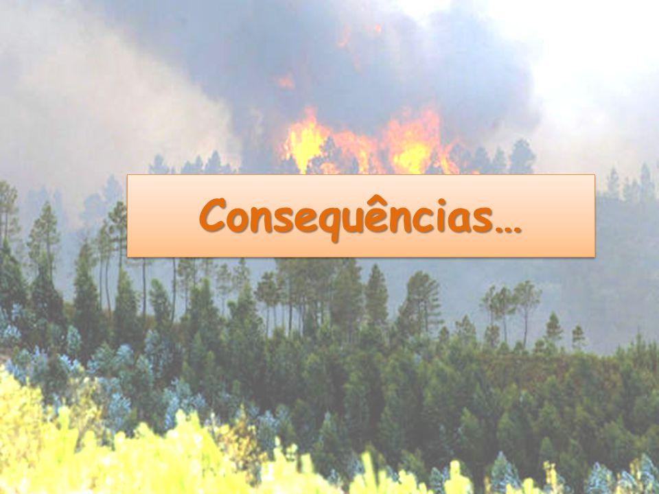 Consequências…Consequências…