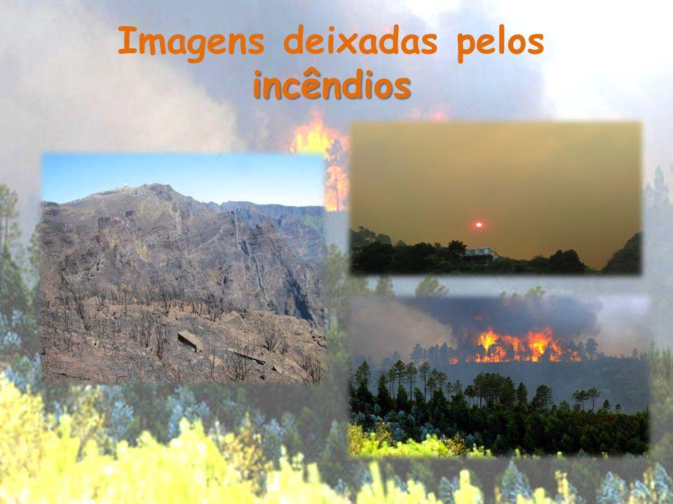 Imagens deixadas pelos incêndios