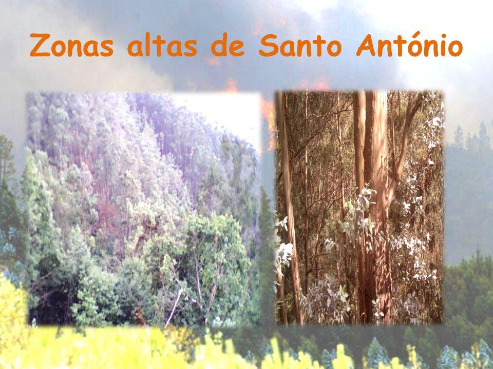 Zonas altas de Santo António