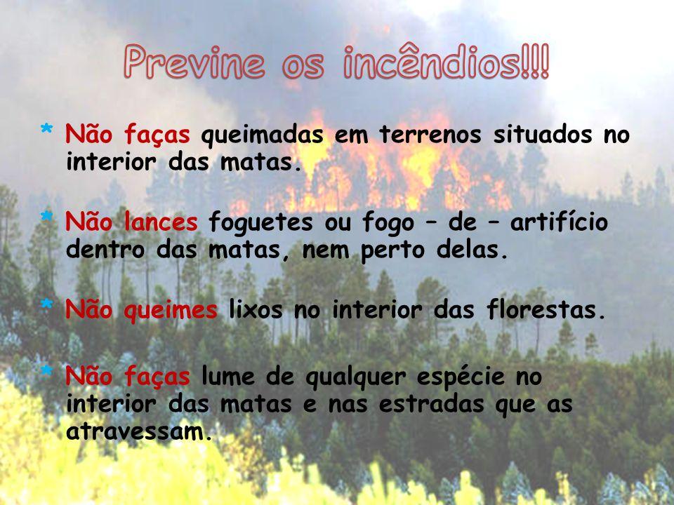 * Não faças queimadas em terrenos situados no interior das matas. * Não lances foguetes ou fogo – de – artifício dentro das matas, nem perto delas. *