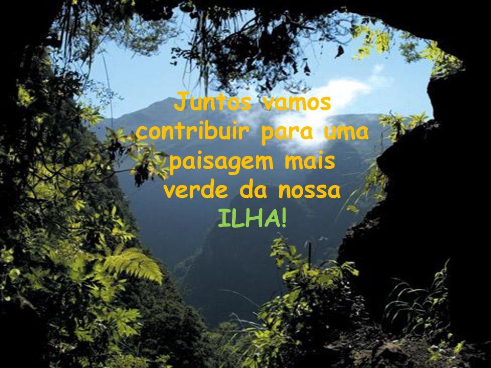 Juntos vamos contribuir para uma paisagem mais verde da nossa ILHA!