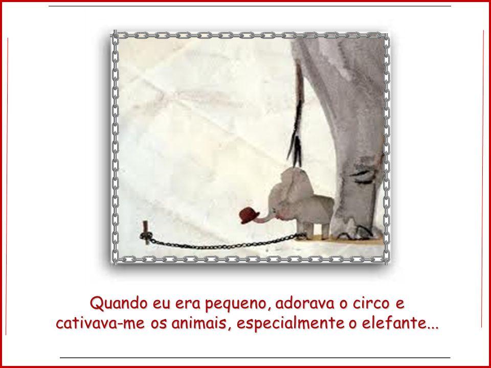 Você já observou o elefante no circo?!!!