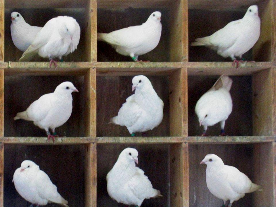 Casa dos pombos Monitoria [12/04/2012] - Parte Gisely11