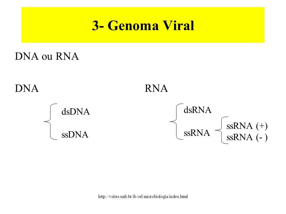 3- Genoma Viral DNA ou RNA DNA RNA dsDNA ssDNA dsRNA ssRNA ssRNA (+) ssRNA (- ) http://vsites.unb.br/ib/cel/microbiologia/index.html