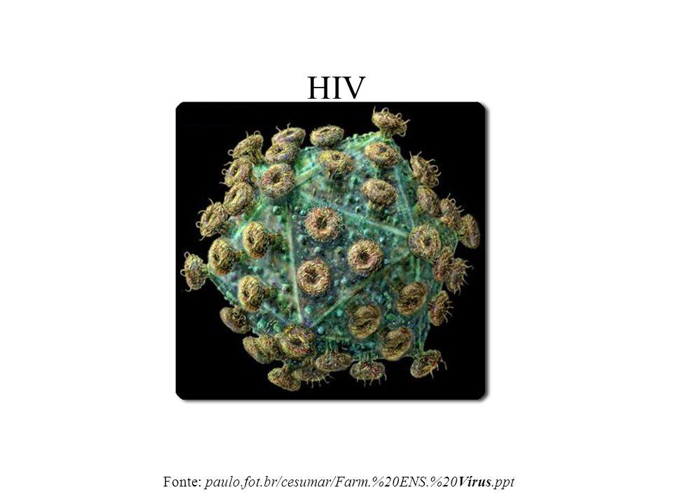 HIV Fonte: paulo.fot.br/cesumar/Farm.%20ENS.%20Vírus.ppt