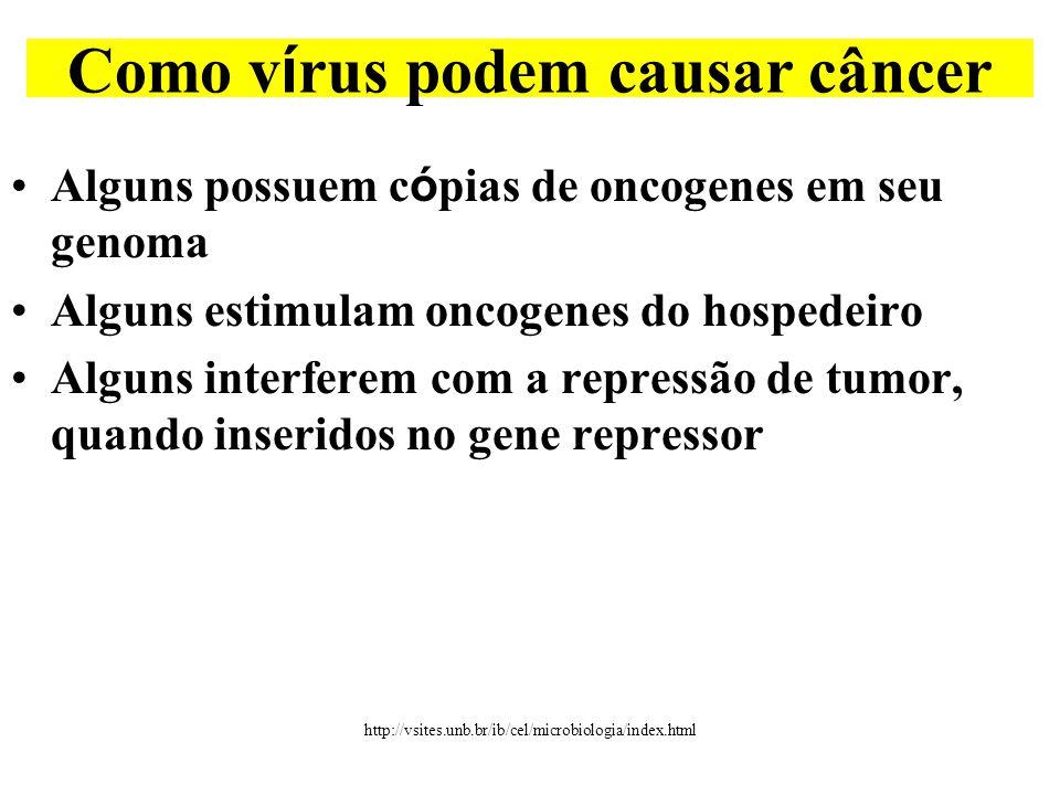 •Alguns possuem c ó pias de oncogenes em seu genoma •Alguns estimulam oncogenes do hospedeiro •Alguns interferem com a repressão de tumor, quando inseridos no gene repressor Como v í rus podem causar câncer http://vsites.unb.br/ib/cel/microbiologia/index.html