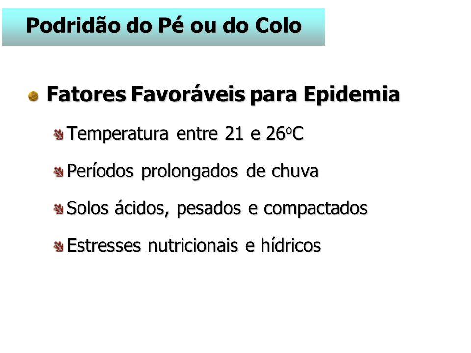 Fatores Favoráveis para Epidemia Temperatura entre 21 e 26 o C Períodos prolongados de chuva Solos ácidos, pesados e compactados Estresses nutricionais e hídricos Podridão do Pé ou do Colo