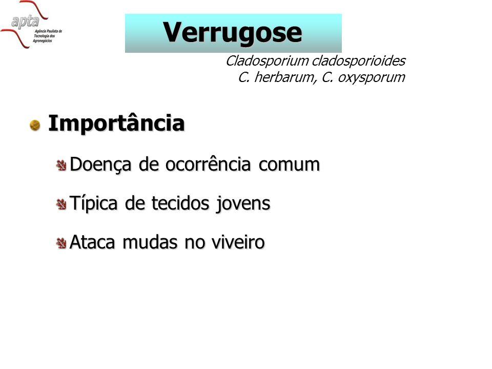 Importância Doença de ocorrência comum Típica de tecidos jovens Ataca mudas no viveiro Verrugose Cladosporium cladosporioides C.