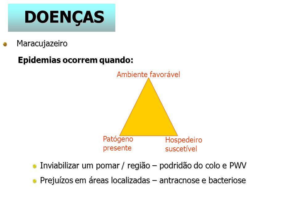 DOENÇAS Maracujazeiro Maracujazeiro Epidemias ocorrem quando: Inviabilizar um pomar / região – podridão do colo e PWV Prejuízos em áreas localizadas – antracnose e bacteriose Ambiente favorável Hospedeiro suscetível Patógeno presente