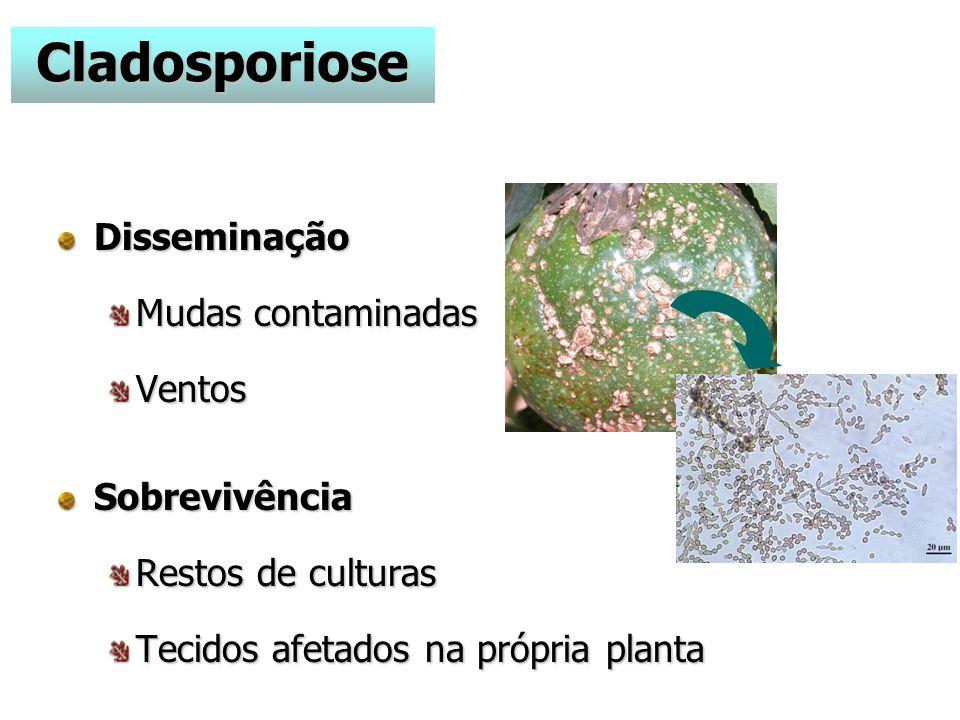 Disseminação Mudas contaminadas VentosSobrevivência Restos de culturas Tecidos afetados na própria planta Cladosporiose