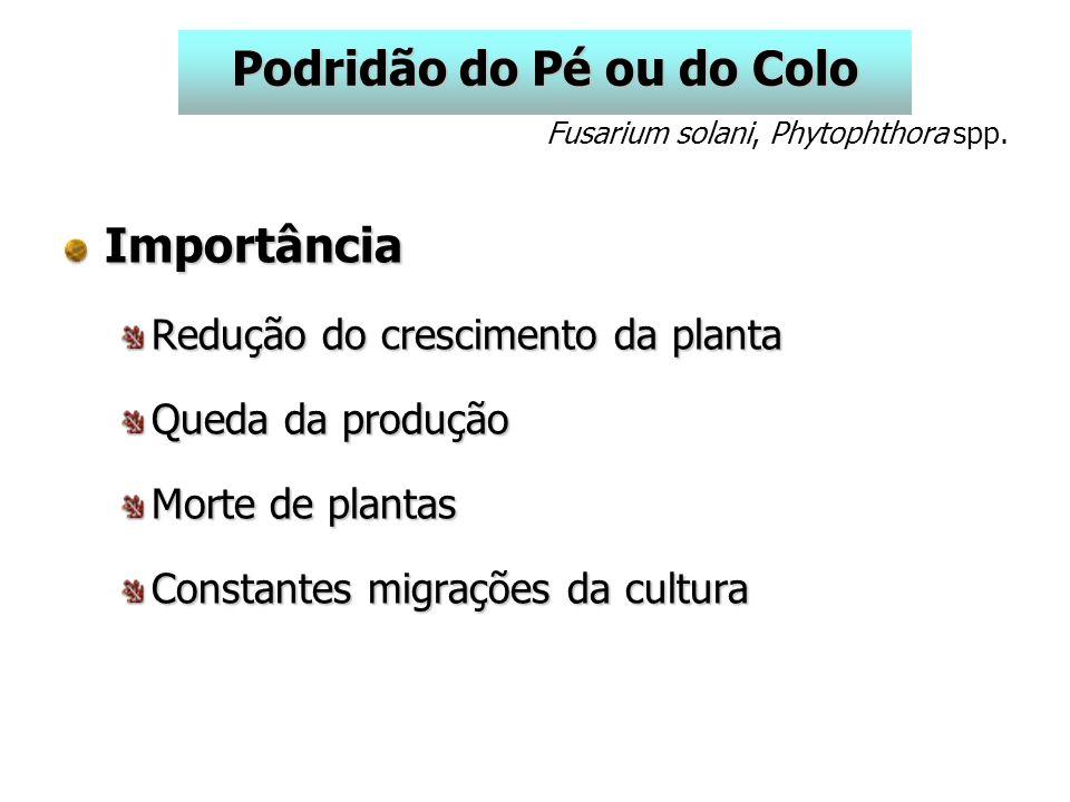 Importância Redução do crescimento da planta Queda da produção Morte de plantas Constantes migrações da cultura Podridão do Pé ou do Colo Fusarium solani, Phytophthora spp.