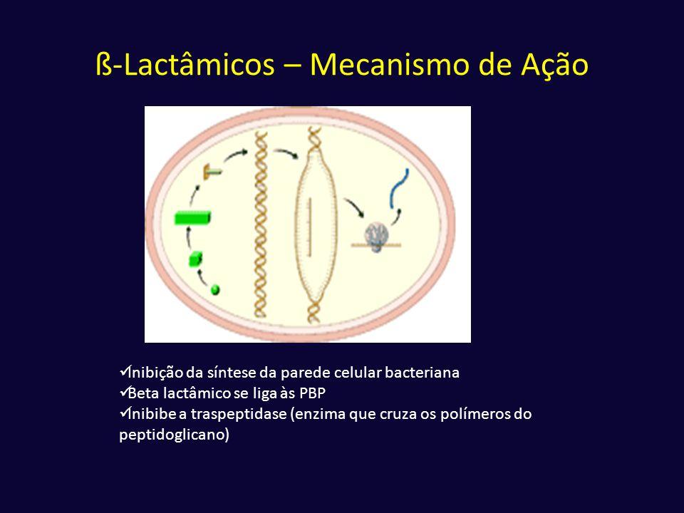 ß-Lactâmicos – Mecanismo de Ação  Inibição da síntese da parede celular bacteriana  Beta lactâmico se liga às PBP  Inibibe a traspeptidase (enzima