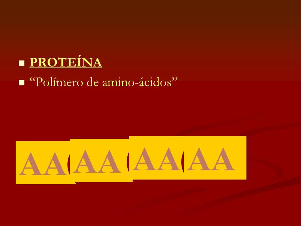 """  PROTEÍNA   """"Polímero de amino-ácidos"""" AA"""