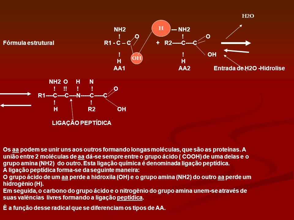 Os aa podem se unir uns aos outros formando longas moléculas, que são as proteínas. A união entre 2 moléculas de aa dá-se sempre entre o grupo ácido (