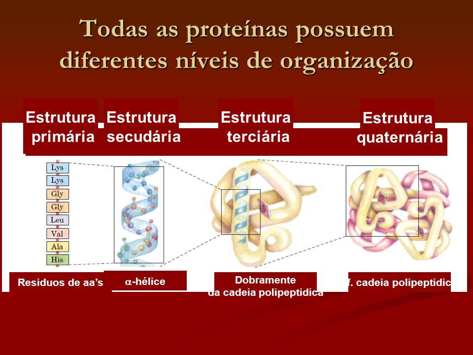 Todas as proteínas possuem diferentes níveis de organização Estrutura primária Residuos de aa's Estrutura secudária  -hélice Estrutura terciária Dobr