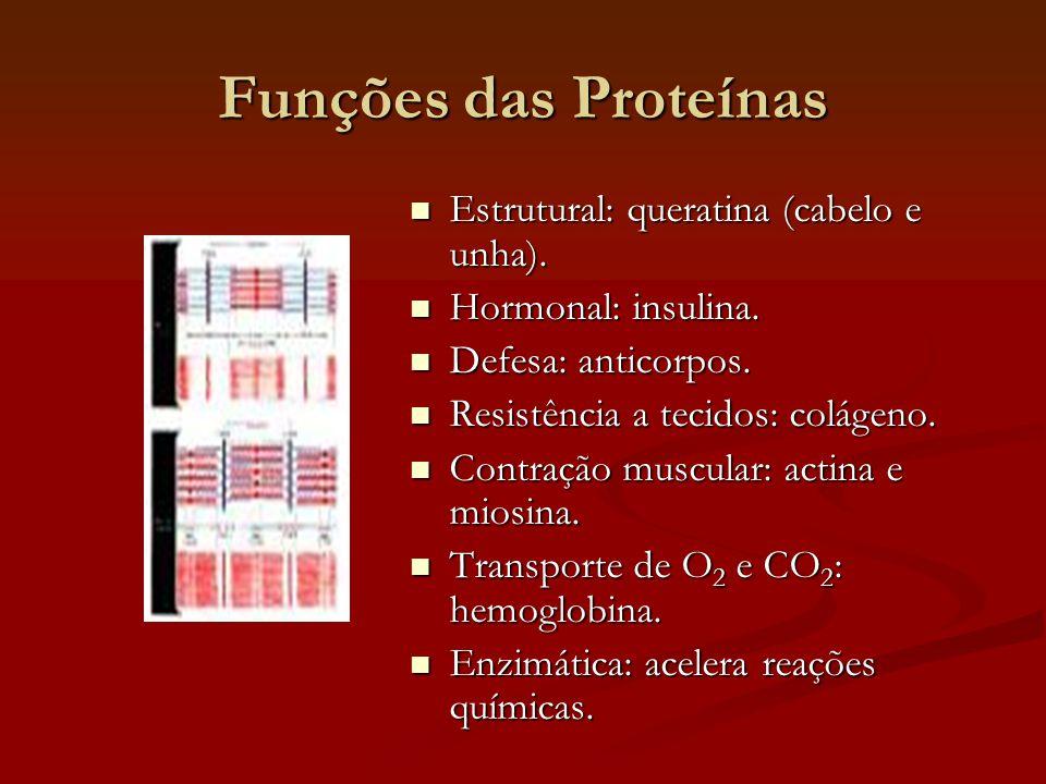 Funções das Proteínas  Estrutural: queratina (cabelo e unha).  Hormonal: insulina.  Defesa: anticorpos.  Resistência a tecidos: colágeno.  Contra