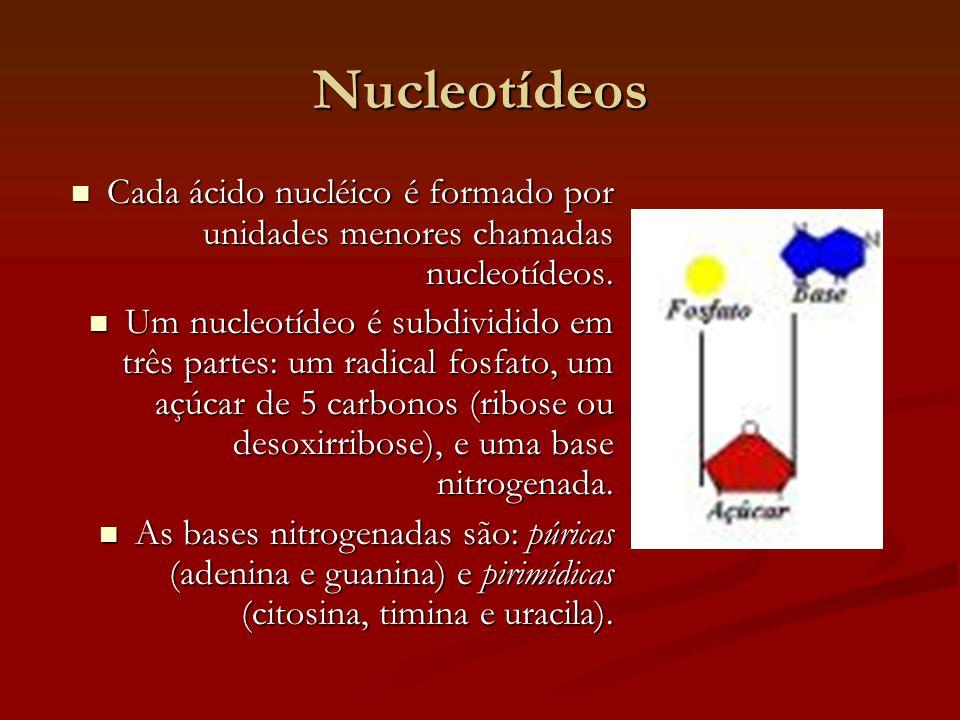 Nucleotídeos  Cada ácido nucléico é formado por unidades menores chamadas nucleotídeos.  Um nucleotídeo é subdividido em três partes: um radical fos
