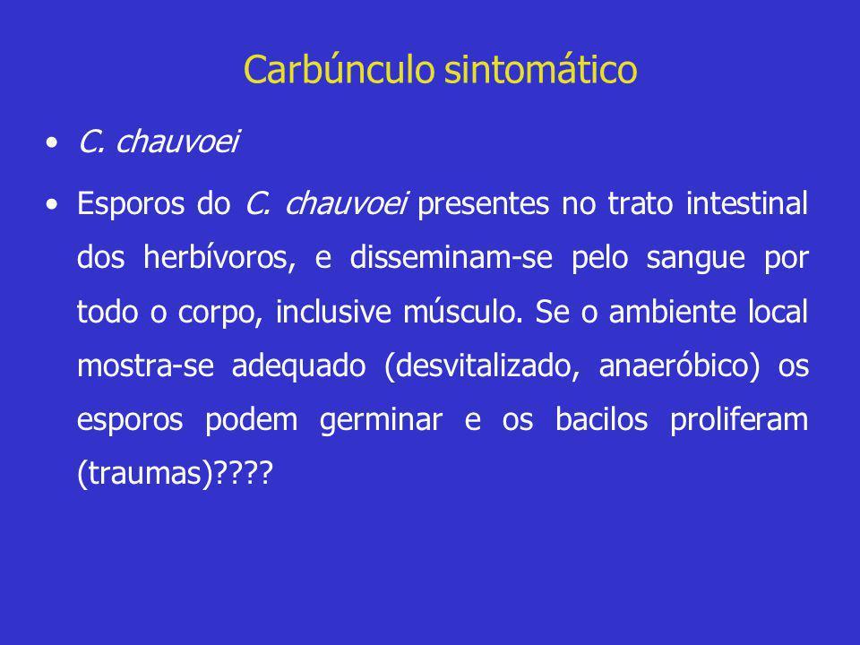 Carbúnculo sintomático •C. chauvoei •Esporos do C. chauvoei presentes no trato intestinal dos herbívoros, e disseminam-se pelo sangue por todo o corpo