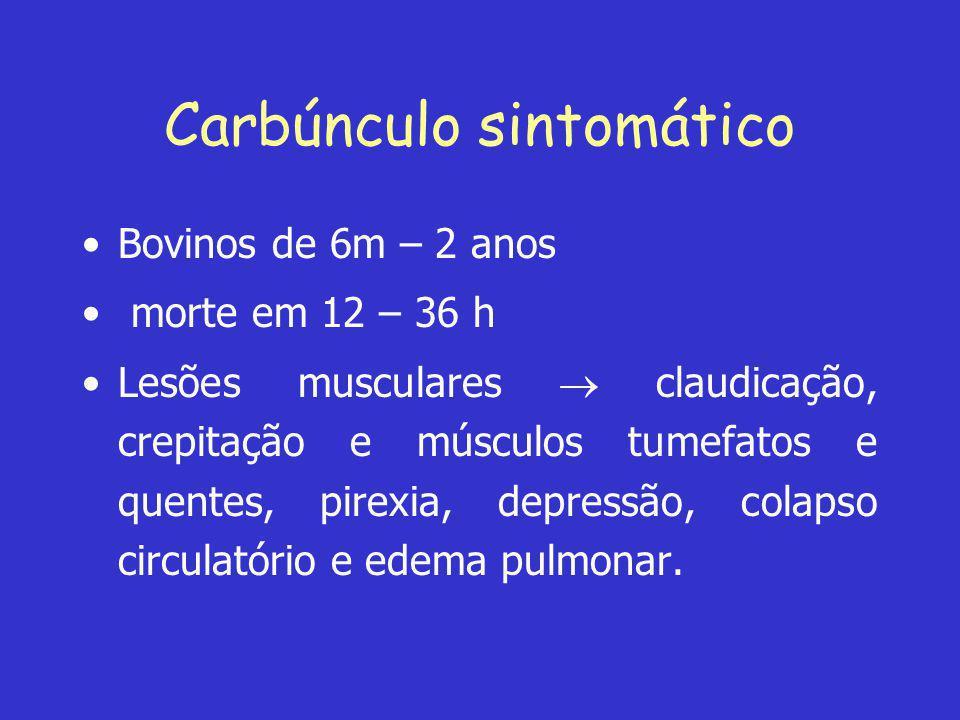 Carbúnculo sintomático •Bovinos de 6m – 2 anos • morte em 12 – 36 h •Lesões musculares  claudicação, crepitação e músculos tumefatos e quentes, pirex
