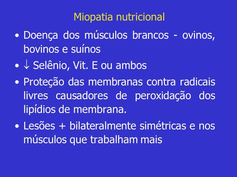 Miopatia nutricional •Doença dos músculos brancos - ovinos, bovinos e suínos •  Selênio, Vit. E ou ambos •Proteção das membranas contra radicais livr