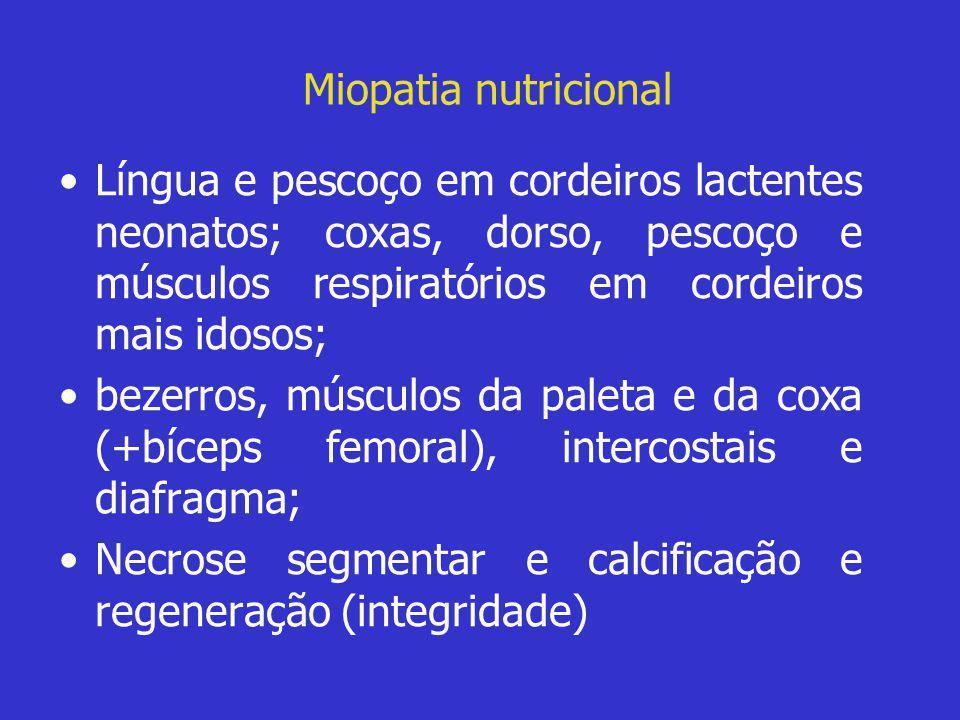Miopatia nutricional •Língua e pescoço em cordeiros lactentes neonatos; coxas, dorso, pescoço e músculos respiratórios em cordeiros mais idosos; •beze
