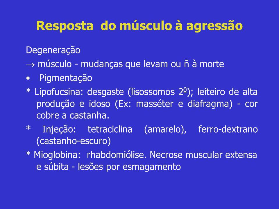 Resposta do músculo à agressão Degeneração  músculo - mudanças que levam ou ñ à morte • Pigmentação * Lipofucsina: desgaste (lisossomos 2 0 ); leitei