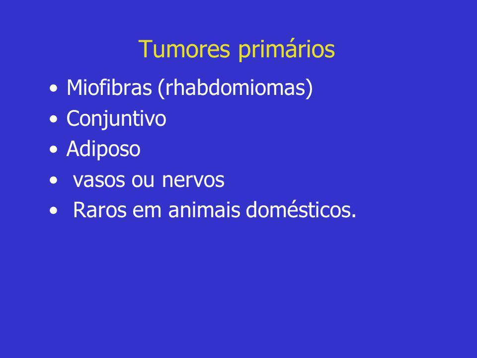 Tumores primários •Miofibras (rhabdomiomas) •Conjuntivo •Adiposo • vasos ou nervos • Raros em animais domésticos.