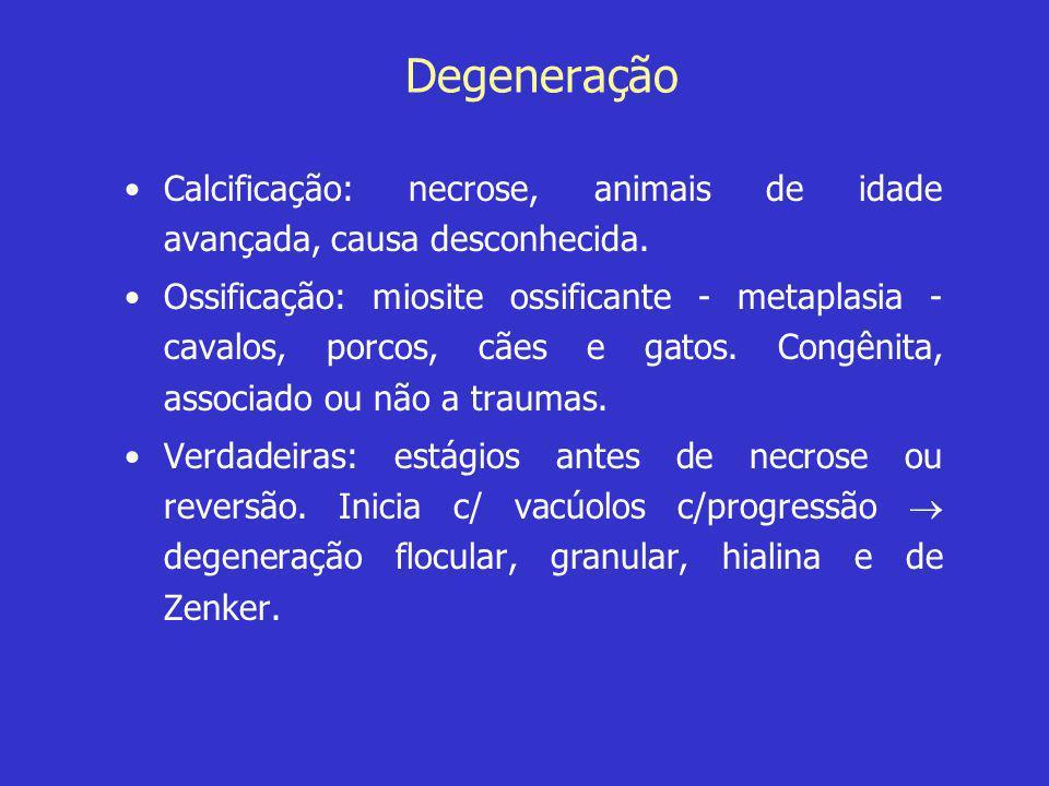 Degeneração •Calcificação: necrose, animais de idade avançada, causa desconhecida. •Ossificação: miosite ossificante - metaplasia - cavalos, porcos, c
