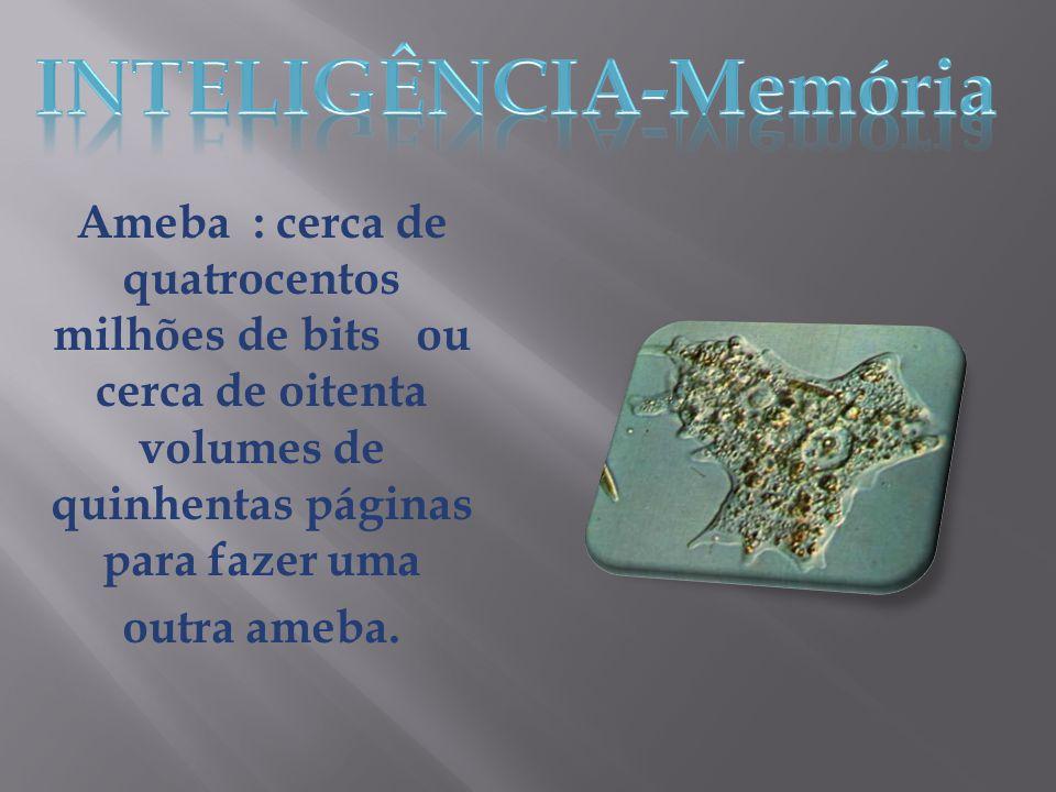 Ameba : cerca de quatrocentos milhões de bits ou cerca de oitenta volumes de quinhentas páginas para fazer uma outra ameba.