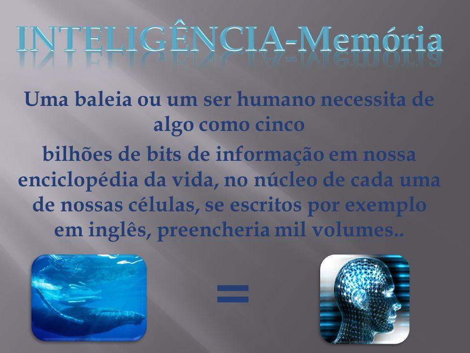Uma baleia ou um ser humano necessita de algo como cinco bilhões de bits de informação em nossa enciclopédia da vida, no núcleo de cada uma de nossas