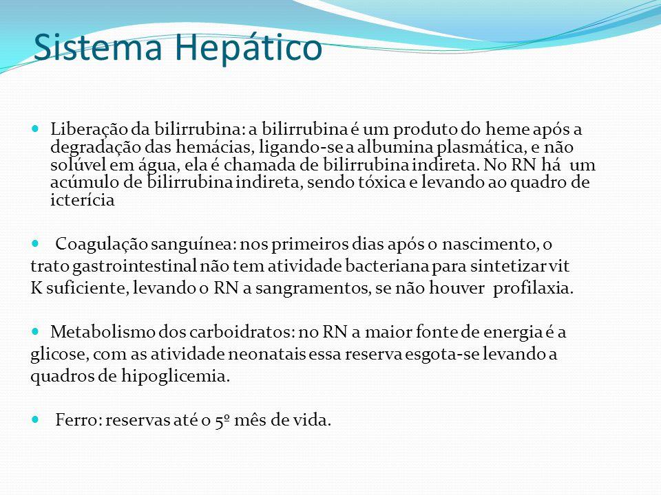 Sistema Hepático  Liberação da bilirrubina: a bilirrubina é um produto do heme após a degradação das hemácias, ligando-se a albumina plasmática, e nã