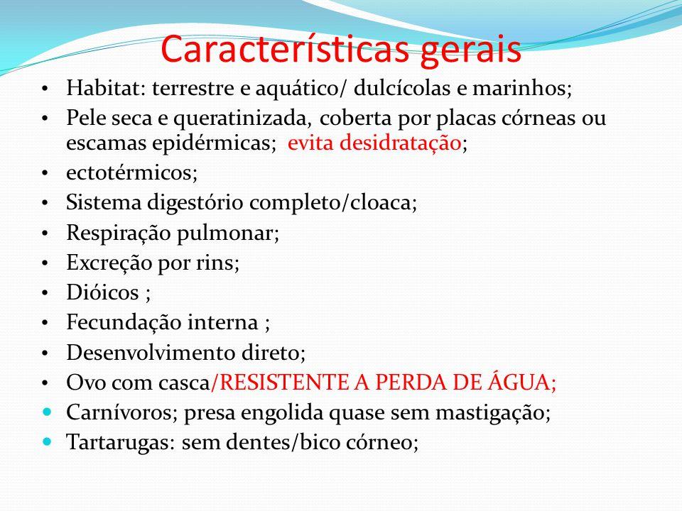 Características gerais • Habitat: terrestre e aquático/ dulcícolas e marinhos; • Pele seca e queratinizada, coberta por placas córneas ou escamas epidérmicas; evita desidratação; • ectotérmicos; • Sistema digestório completo/cloaca; • Respiração pulmonar; • Excreção por rins; • Dióicos ; • Fecundação interna ; • Desenvolvimento direto; • Ovo com casca/RESISTENTE A PERDA DE ÁGUA;  Carnívoros; presa engolida quase sem mastigação;  Tartarugas: sem dentes/bico córneo;