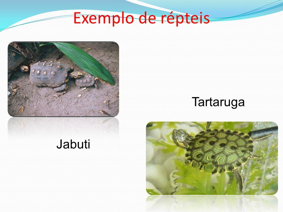 Exemplo de répteis Jabuti Tartaruga