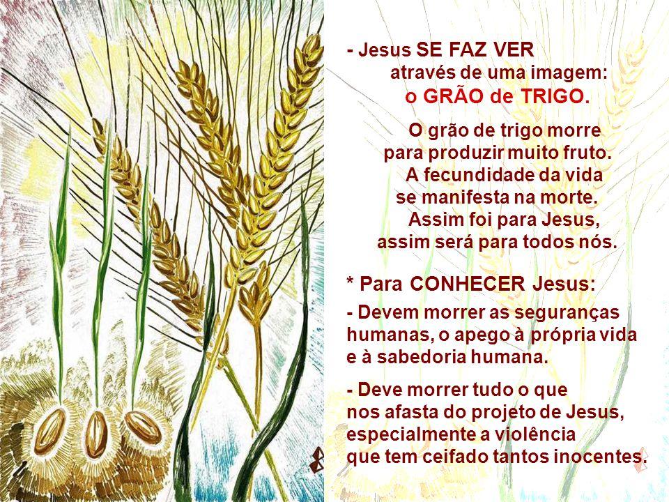 - Jesus SE FAZ VER através de uma imagem: o GRÃO de TRIGO.